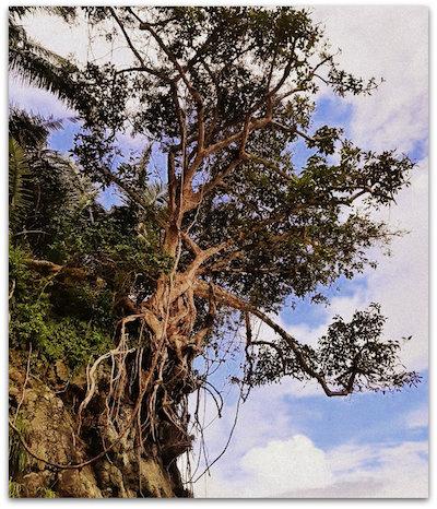 СДВГ Дерево, выжившее на скалах